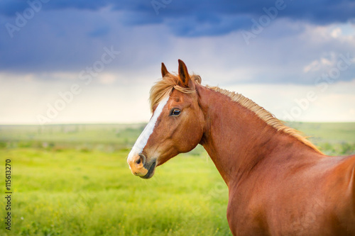 Red horse with long mane portrait against dark sky