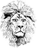 Lion with big mane