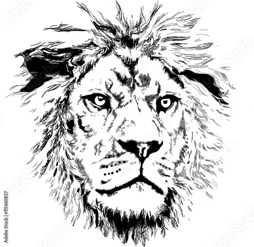 Fototapeta Lion with little mane