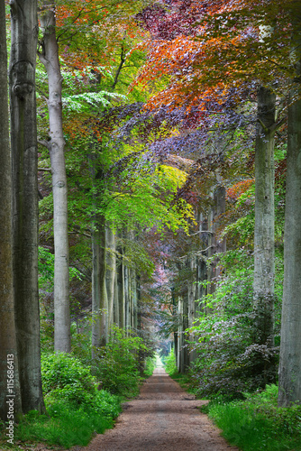Panel Szklany Walkway in a green Spring beech forest in Leuven, Belgium