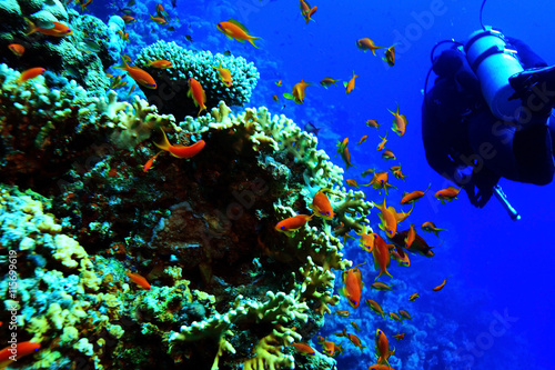 obraz PCV coral reef in the warm sea