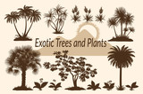 Exotic Plants, Tropical Palm Trees, Flowers and Mountain Landscape with the Rising Sun Silhouettes. Vector