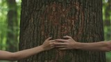 Tender moment of love. Close-up of holding hands of young loving couple on a background of a heart carved on a tree in green spring forest