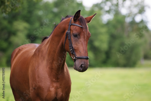 beautiful horse outdoors in summer