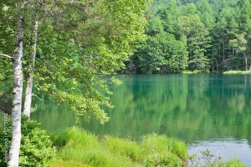 緑色に染まる森の中の池 - 御射鹿池(長野県、日本)