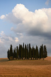 Cypress trees in Val d'Orcia, Tuscany - 115831420