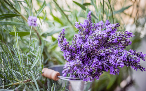 mata magnetyczna Lavender flowers