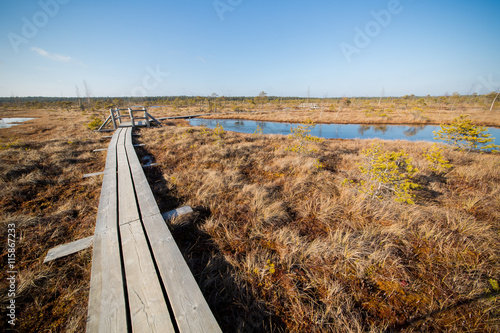 obraz lub plakat Landscape of swamps with pathway in Latvia.