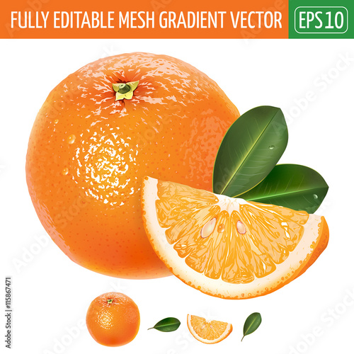 Orange on white background. Vector illustration