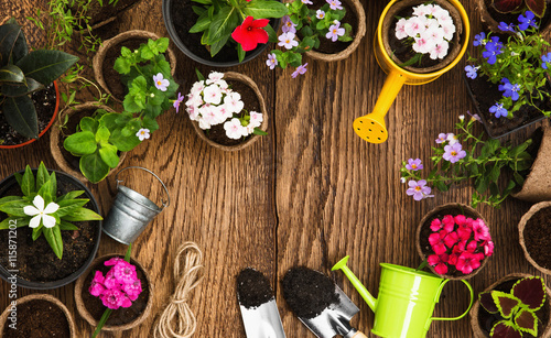 Gardening tools and flowers - 115871202