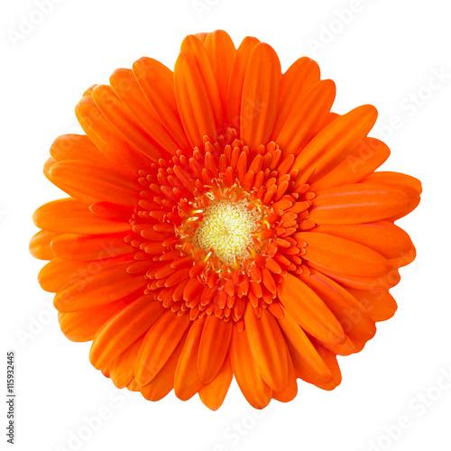 Fotobehang Gerbera Blume Gerbera