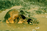 Real human skull as crime scene, color manipulated, narow focus