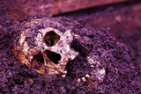 Real human skull as crime scene, color manipulated, narrow focus