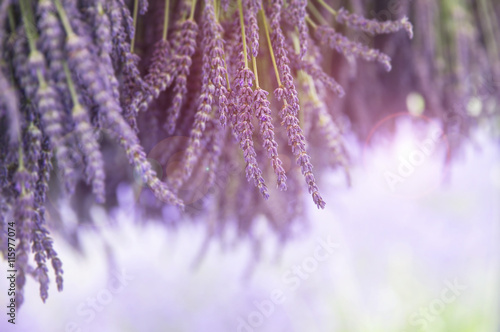 Bunches of fresh lavender hanging to dry in the sunshine. Selective focus and intentional lens flare.  - 115977074