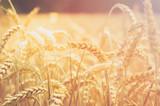 Getreideähren - 115995478