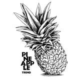 Ananas. Czarno biała ilustracja