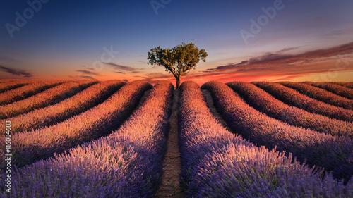 Tuinposter Lavendel Lever de soleil sur un champ de lavande. Valensole - Alpes-de-Haute-Provence