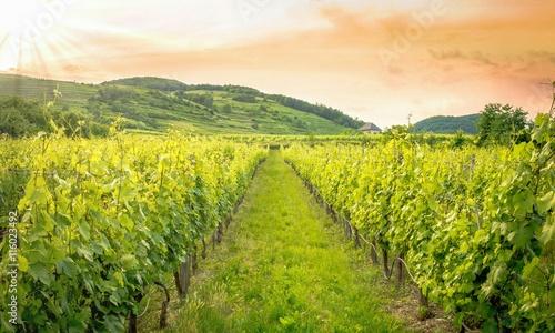 Dämmerung über den Weinbergen © defpics