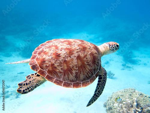 Fotobehang Schildpad tortue verte nageant à Mayotte