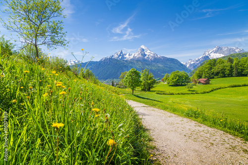 Fototapety, obrazy : Idyllic landscape in the Alps with meadows and flowers
