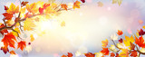 Branch With Autumn Maple Leaves And Sunshine