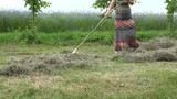 Young pretty woman in dress rake hay dry grass near cornflower field. 4K