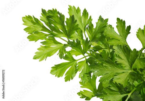 green leaves of parsley