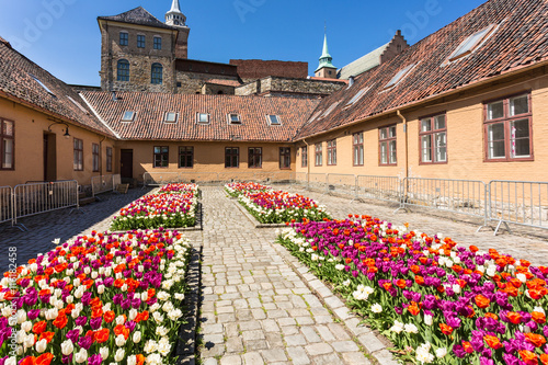 Poster, Tablou Tulips in Akershus Fortress