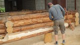 Man cuts off beam chainsaw for future log cabin. Construction works with a wooden structure
