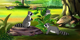 Family of Raccoons in the Spring Forest