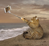 A cat is sitting on a coast alone. He is making a photo of himself.