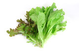 fresh lettuce isolated on the white background