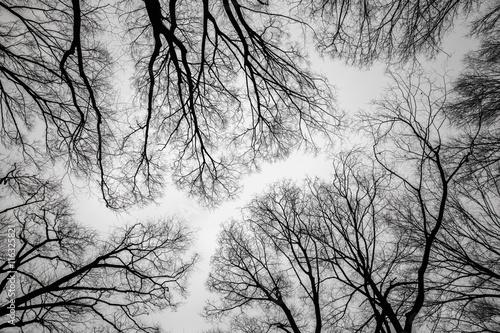 oddzial-martwego-drzewa