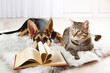 Quadro Cute cat and funny dog with book on carpet