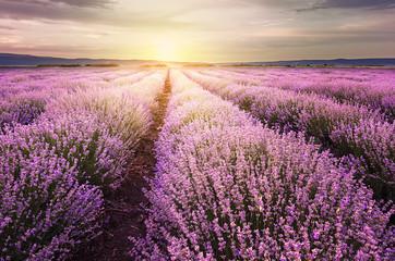 Sunrise over lavender field in Bulgaria