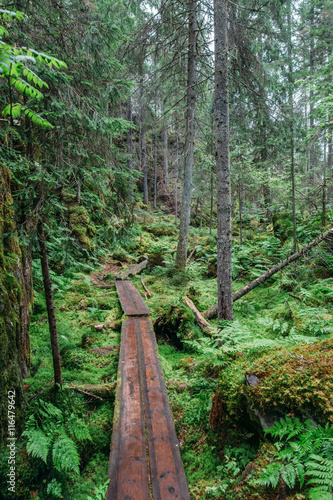 Tuinposter Weg in bos Orinoro Gorge, Finland (Suomi)