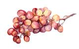 Red watercolor grape