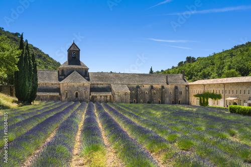 Tuinposter Olijfboom Abbaye de Senanque and lavender, France