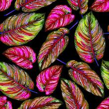 Follaje tropical patrón transparente. Hojas de colores de plantas exóticas Calathea ornata sobre fondo negro, colores vibrantes. ejemplo de la acuarela hecha a mano.