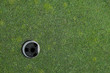 Closeup of golf course green and hole, waiting for a ball
