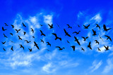Flying birds on cloudy blue sky background