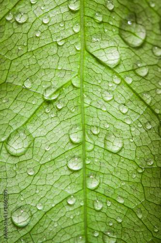 krople-wody-na-lisciach-krople-deszczu