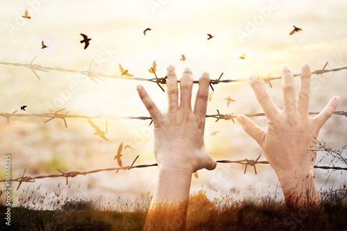 Poster Hands on wire prison and birds flying on sunset sky background
