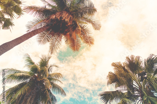 Landscape nature background of shore tropic. Coconut palm trees at seaside tropical coast, vintage effect filter and stylized