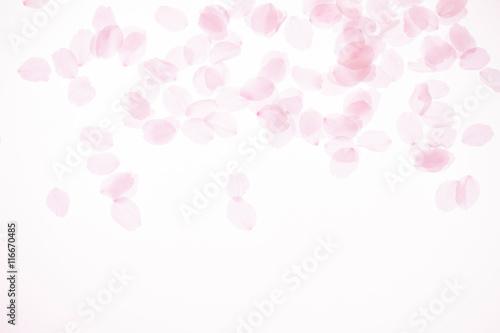 桜の花びら Poster