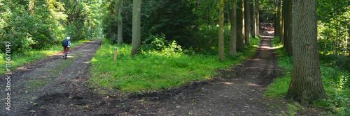 Papiers peints Route dans la forêt Deux chemins