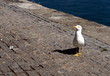 Sea gull in the port of Barcelona.