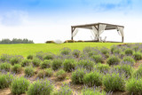 romantic place with pergola beside lavender field
