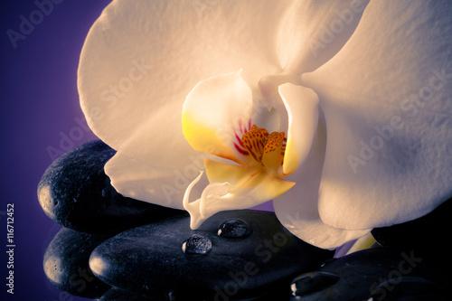 Poster Orchidea bianca delicata