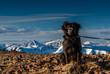 Dog on the Summit